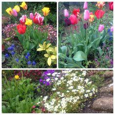 Ramilletes de tulipanes #springtime