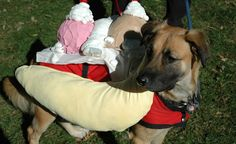 20 Adorable Photos of Pets in Halloween Costumes.  BudgetTravel.com