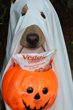 Trick or Treat ... Re-pinned by StoneArtUSA.com ~ affordable custom pet memorials since 2001