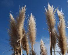 Coastal Grasses, near Big Sur, California