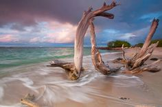 Metal Photo Print Caribbean Beach Photo Driftwood by klgphoto  THIS HAS TO BE ONE OF MY MOST FAVORITE  OF FAVORITE THINGS I LOVE!!  I know exactly where and what size would be so perfect in my place. This would be my starting point.  *** And that's way over due.  Now to just drum up the cash!  We'll see!