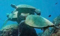 Hawaii's Best Diving