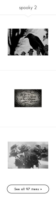 """""""spooky 2"""" by northenxlightxsky ❤ liked on Polyvore featuring pictures, animals, backgrounds, black and white, photos, fillers, quotes, text, words and phrase"""