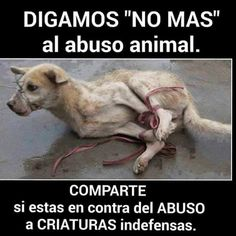 No al maltrato al animal por favor los animales sufren son iguales q uno tiene vida ellos son indefensos solo les falta que hablen ayudemos y denunciemos contra el abuso animal