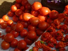 tomates & piments bonnet