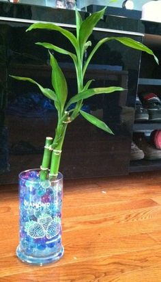 My way to reuse my candle jar