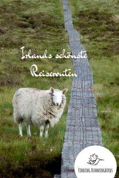 Du bist auf der Suche nach den schönsten Reiserouten in Irland? Hier findest Du sie.