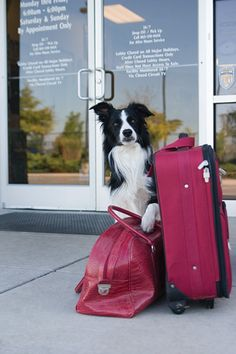 How to pick a good boarding kennel for your pet's staycation.