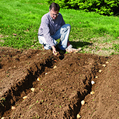 7 ways to plant potatoes
