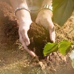 Animal Tree® - die schönste Art der Tierbestattung. Aus der Asche deines Haustiers wächst ein Baum. Water Storage, Tree Planting, Ash, Roots, Memories, Tree Structure, Animales