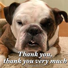 26Feb17 Fenway - Bulldogs - Thank You