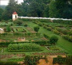 vegetable garden by Eva0707