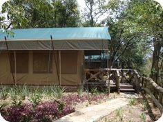 The monkeys and birds are your morning alarm clock here. Fairmont Mara Safari Club, Masai Mara, Kenya.