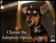 """No matter how little money and how few possessions you own, having a dog makes you rich"". Louis Sabin      The Houston SPCA has many wonderful dogs ready to enrich your life.  Why not come by and choose the Adoption Option?  Doors open today at 11am.  www.houstonspca.org"
