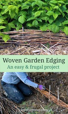 How to weave pruned raspberry canes into attractive garden edging