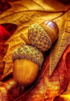 Wall Paper Iphone Spring Leaves 68 Ideas For 2019 Fall Pictures, Fall Photos, Autumn Scenes, Autumn Aesthetic, Autumn Photography, Photography Poses, Autumn Theme, Happy Fall, Acorn