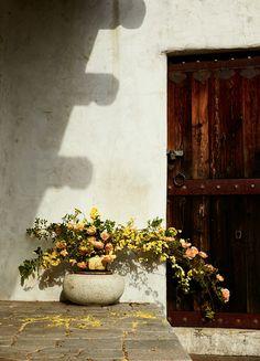 foraged flora by louesa roebuck + sarah lonsdale Fresh Flowers, Beautiful Flowers, Beautiful Life, Beautiful Places, Floral Style, Floral Design, Floral Wedding, Wedding Flowers, Interior Decorating Styles