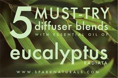 5 MUST-TRY Diffuser Blends with Eucalyptus Radiata essential oil! | Spark Naturals