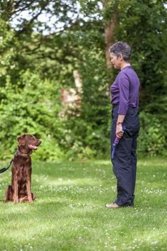 Here are eight common mistakes you should avoid when teaching your pup new behaviors and tricks. via @KaufmannsPuppy
