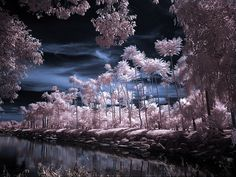 Infrared-photo10 in Beyond Visible: 100 Years Of Infrared Photographs
