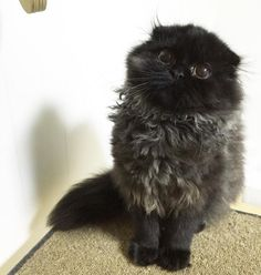 The Cat That Everyone is Talking About In The Internet!
