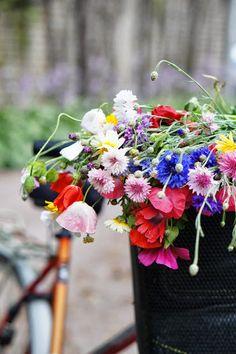 #Flowers in bike basket
