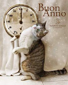 Happy New Year 🍎 #ilfotografodeigatti #gattopoldo #gatto #gato #meow #koshka #kočka #chat #kott #katze #neko #bastet #funnycats #cute #kitten #ilovemycat #catoftheday #instacat #catofinstagram #petoftheday #micio #purr #kitten #catlover #miao #gattidiinstagram #mypet #lovecat #mycat