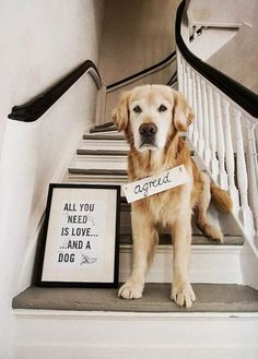ALL YOU NEED IS LOVE.  .AND A DOG  -photo credit to the owner #dogs #cats