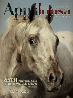 41 Best Appaloosa is the Breed of Choice images in 2013
