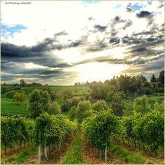 """""""Un'oasi di silenzio"""" La #PicOfTheDay #turismoer di oggi si gode il #tramonto tra le #vigne di #Castelvetro di #Modena  Complimenti e grazie a @franc94 / """"An oasis of silence"""" Today's #PicOfTheDay #turismoer enjoys the#sunset among the #vineyards of #Castelvetro di #Modena  Congrats and thanks to @franc94"""