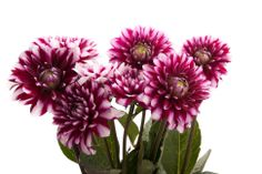 Types of Purple Flowers | Delivery available from: Apr 15, 2014