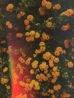 Yellow flowers 2. ✨