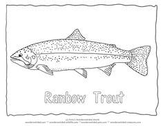 """Rainbow Trout Picture to Color 1 Trout Coloring Page  with Trout Outline Pictures , Rainbow trout picture  fish with outline font of the word """" Trout"""" added Fisch Ausmalbilder, Kostenlose malvorlagen mit Fish Bildern , Tierbilder zum Herunterladen fuer Kinder Fische , Fischen Forelle Bild , Ausmalbilder mit Forellen zum Fischen"""