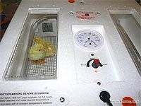 How long does it take a chicken egg to hatch? The incubation period for chicken eggs. Hatching eggs in incubator. Incubation procedures for optimum egg hatchability. How to use an incubator. Chicken Incubator, Egg Incubator, Incubating Chicken Eggs, Egg Candling, Hatching Chickens, Laying Hens, Poultry, Countryside