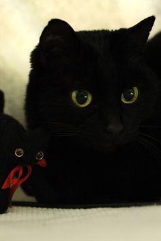 cybergata: Love them black kittehs.