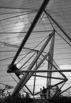 The Snowdon Aviary at London Zoo, designed by Cedric Price and photographed by Eric de Maré Urban Landscape, Landscape Design, Cedric Price, Zoo Architecture, Tensile Structures, Urban Intervention, Bird House Kits, Late 20th Century, Brutalist