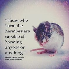 Those who harm the harmless . . . | inside the Divine Pattern, Anthony Douglas Williams