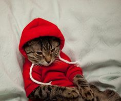 Cute cats and dogs in their comfy hoodies!