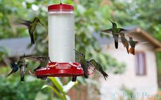 hummingbird feeder at Milpe Sanctuary