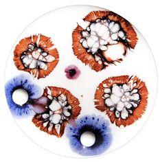 Petri dish paintings by Klari Reis. (via The Daily...