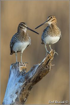 The Snipe perform.. | Flickr - Photo Sharing!❤️