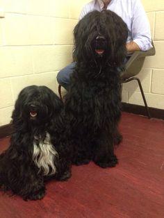 Big pals. Suzy and Pompom
