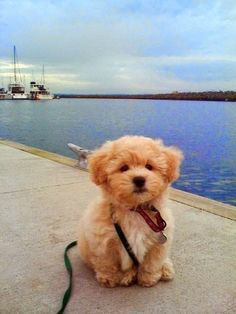 See more Top 10 Most Affectionate Dog Breeds