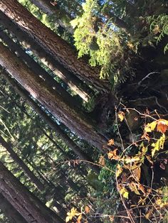 BC Forest Photography by NyxStudioArt Forest Photography, Diy Art, North America, Artwork, Nature, Painting, Work Of Art, Painting Art, Paintings