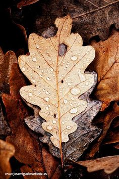 "a season of desperate hopes. The leaves are souls begging to turn life on pause."" ~ Teodora Savu, Listen to the Leaves Hello Autumn, Autumn Day, Autumn Leaves, Winter, Seasons Of The Year, Belleza Natural, Autumn Inspiration, Happy Fall, Fall Season"