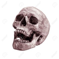 Image from http://previews.123rf.com/images/worac/worac1408/worac140800053/30790874-sideview-of-human-skull-open-mouth-on-isolated-white-background-Stock-Photo.jpg.