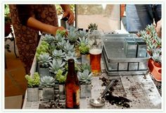 Succulents as wedding favors or table centerpieces