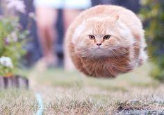 speeding bullet cat