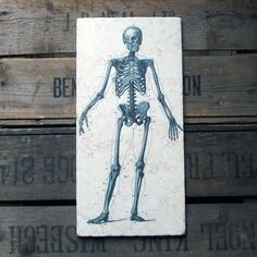 19th century steel engravings of the anatomy of human bones reproduced on solid limestone.  £49