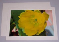 Ethereal Beauty Cactus Blossom  BLANK CARD by KindredSpiritImages